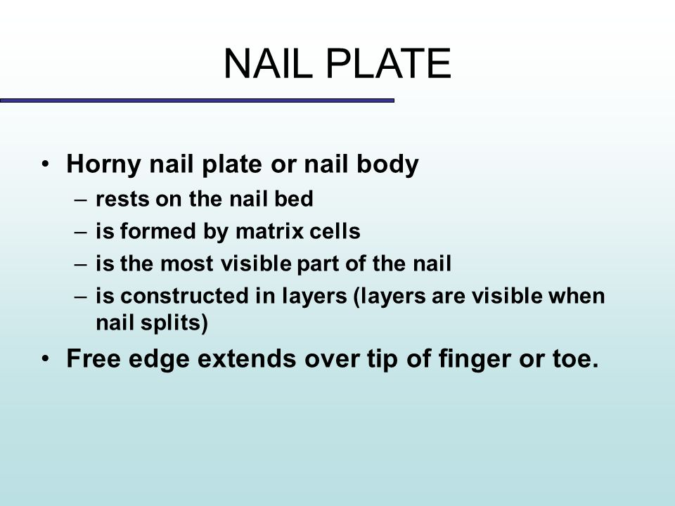 Study of the Nail Copyright 2013 © SAP. - ppt video online download