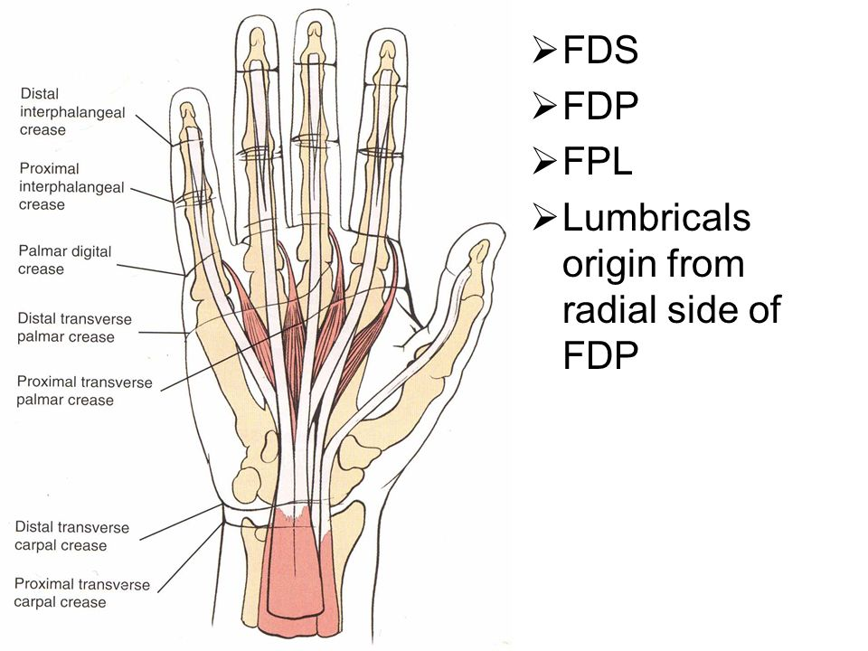 FLEXOR TENDON INJURIES OF THE HAND - ppt video online download