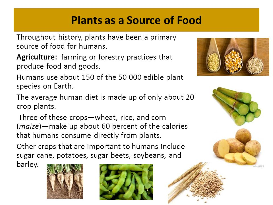 What Source Of Energy Do Plants Use To Make Food