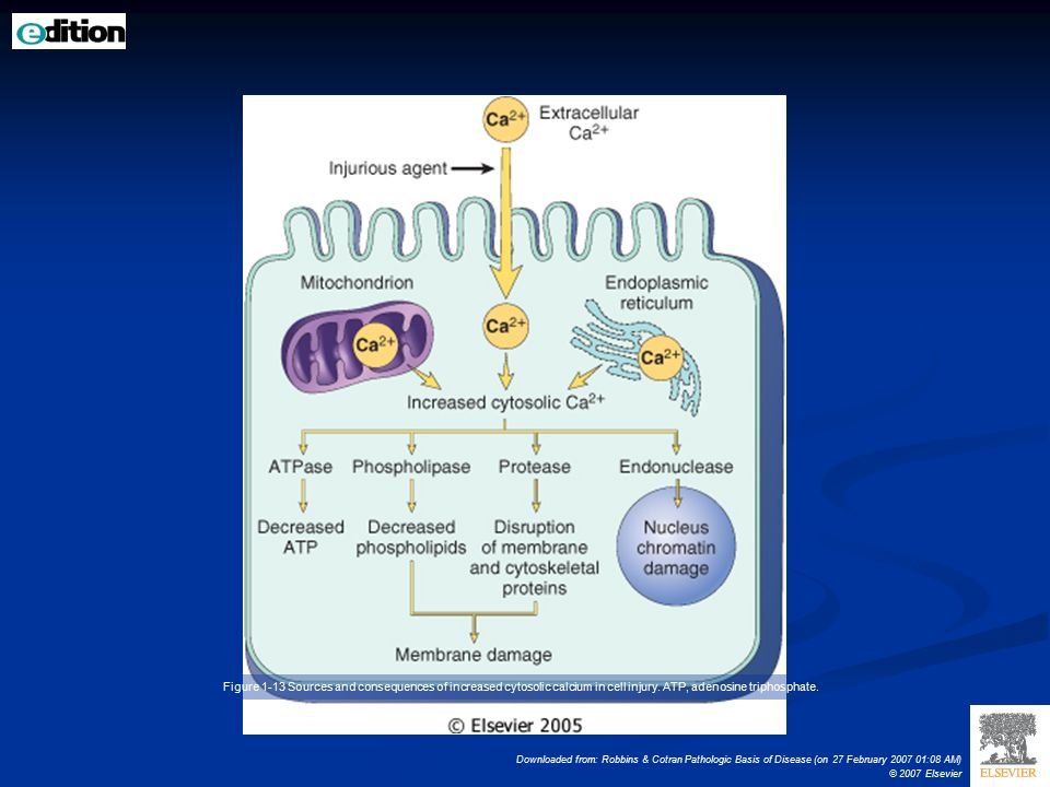 Cellular Adaptations, Cell Injury, and Cell Death - ppt download