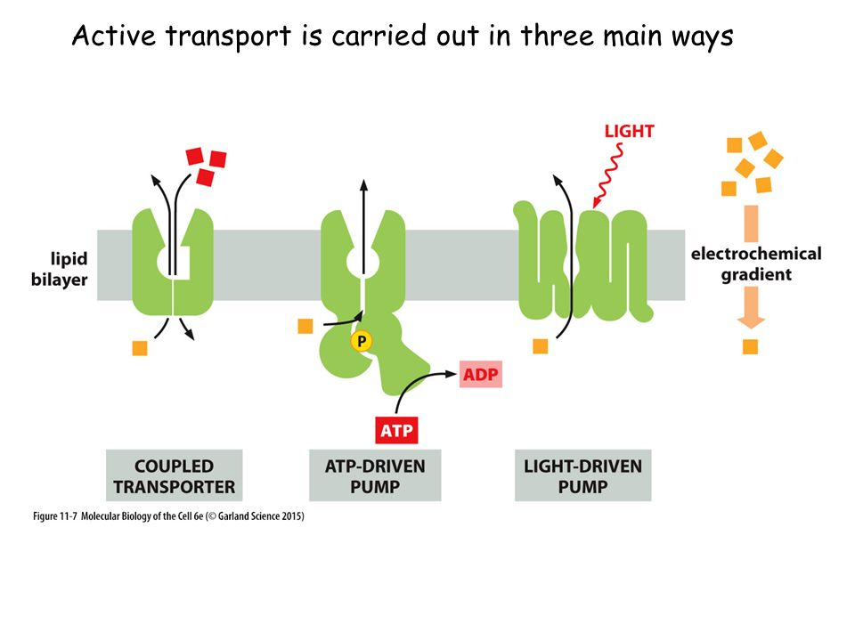 Active transport is carried out in three main ways