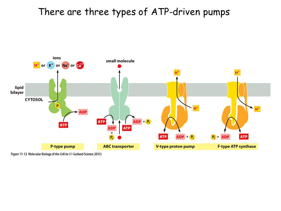 There are three types of ATP-driven pumps