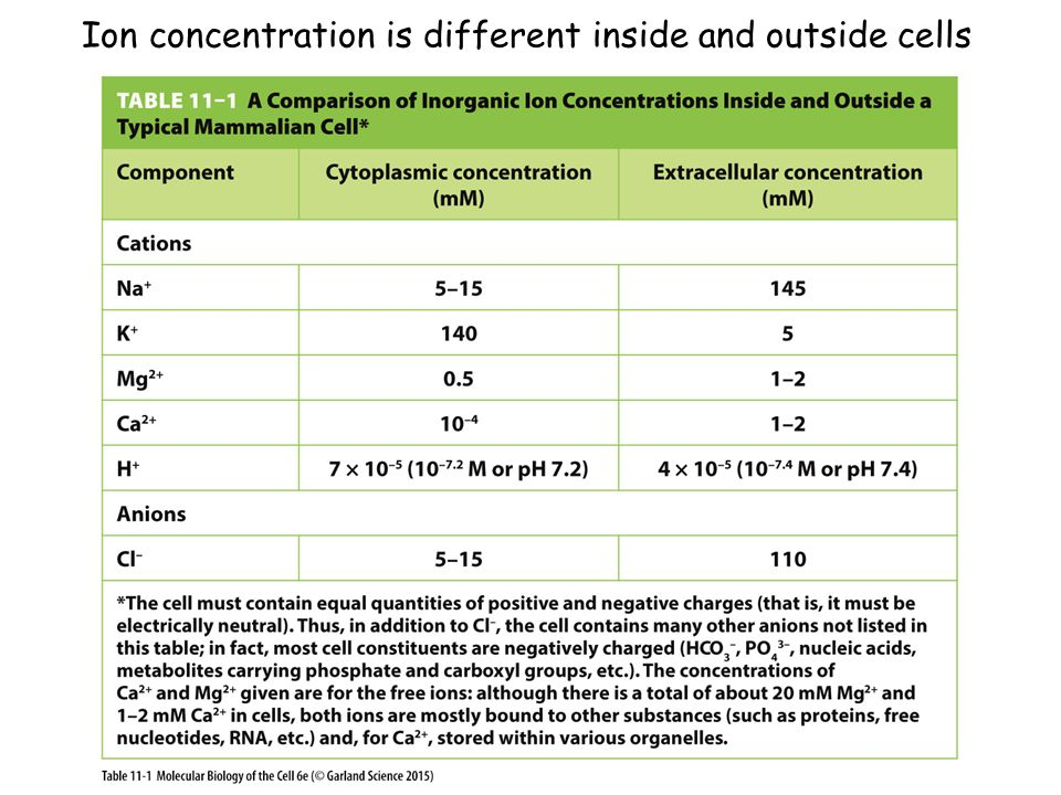 Ion concentration is different inside and outside cells