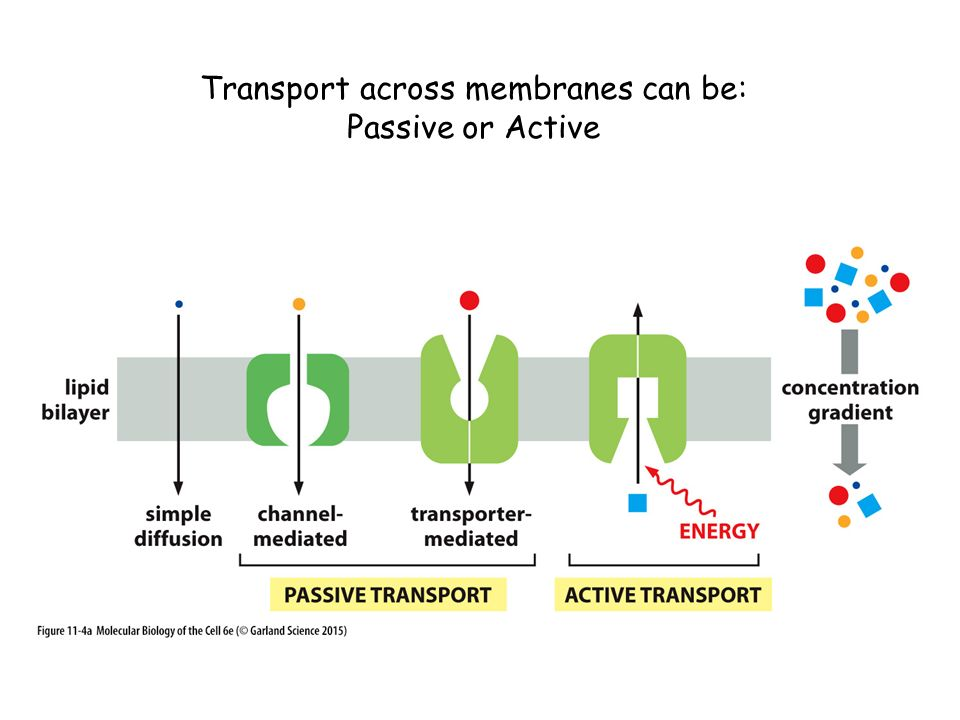 Transport across membranes can be: