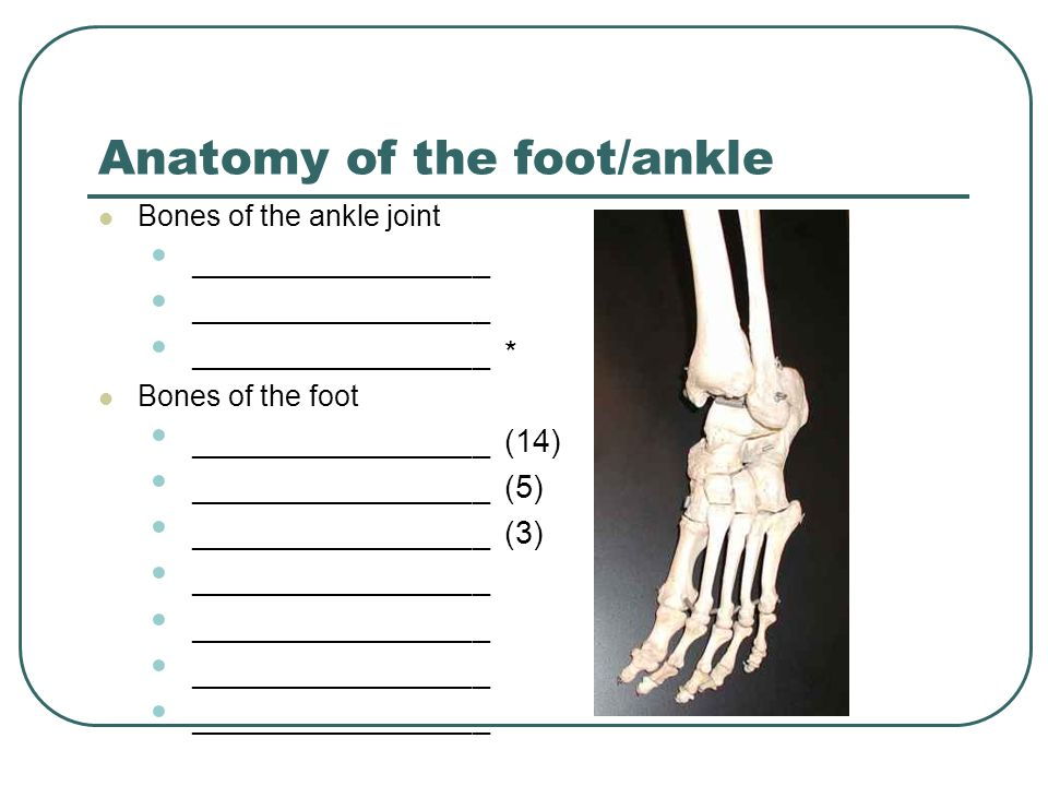 Ankle And Foot Assessment Ppt Download