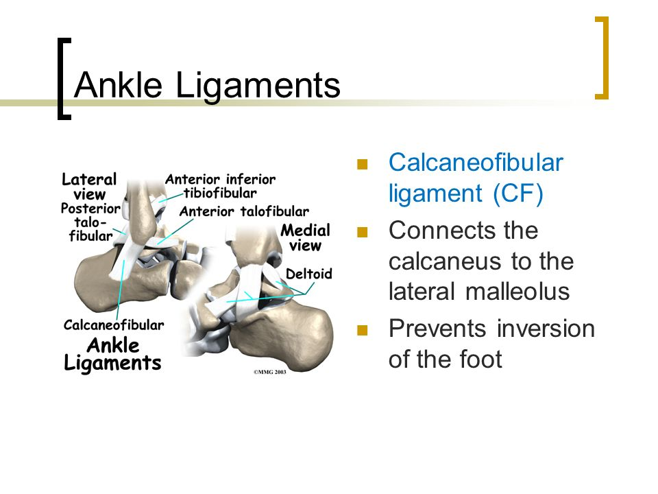 Foot And Ankle Injuries Ppt Video Online Download
