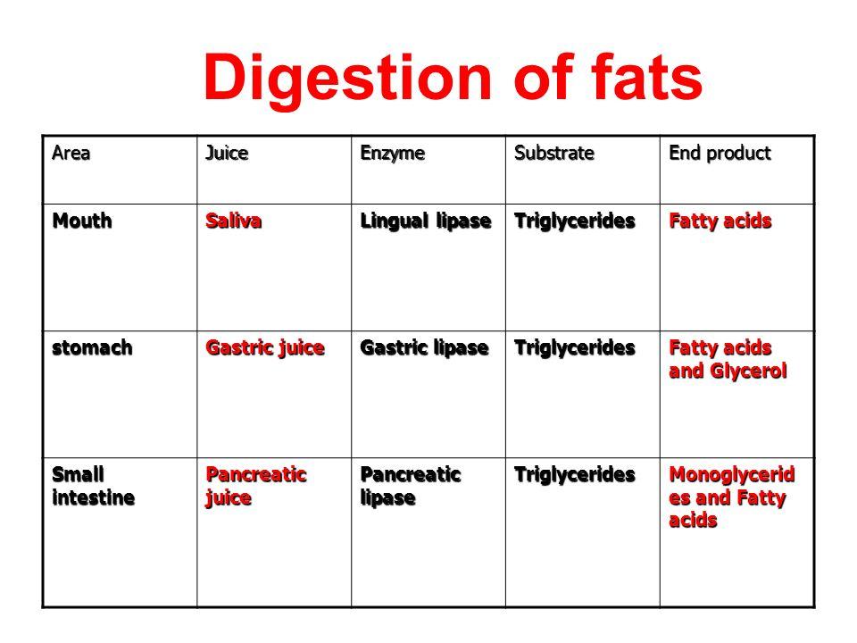 gastric lipase breaks down