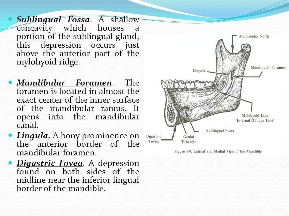 Anatomical Landmarks Of The Mandibular Arch Ppt Video Online Download
