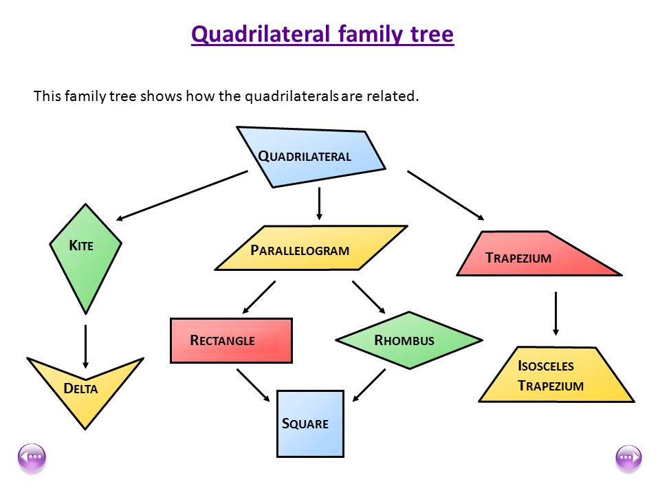 Trapezium quadrilateral family tree diagram wiring diagram database quadrilaterals ppt download rh slideplayer com quadrilateral family tree chart blank family tree template editable ccuart Choice Image
