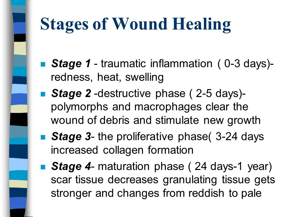 Principles Of Wound Care Ppt Video Online Download
