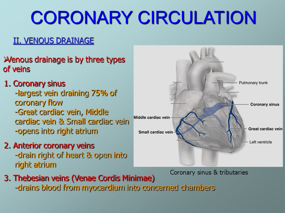Coronary Circulation Ppt Video Online Download