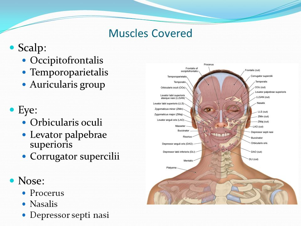 Muscles of Facial Expression - ppt download