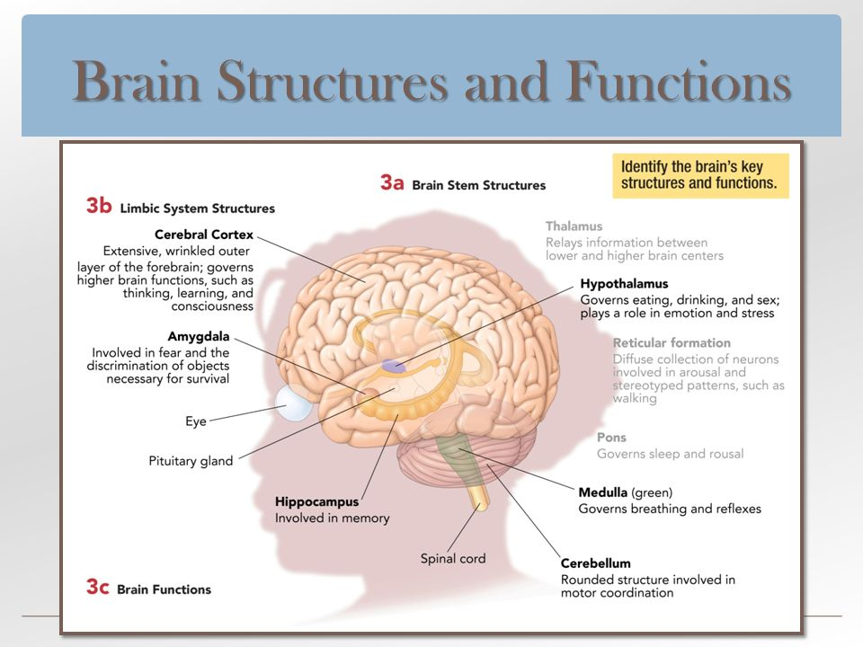 HIGHER BRAIN FUNCTION PDF
