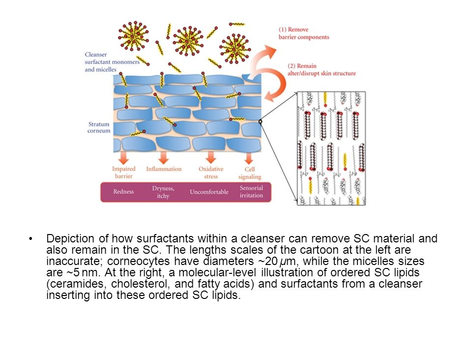 Depiction of how surfactants within a cleanser can remove SC material and also remain in the SC.