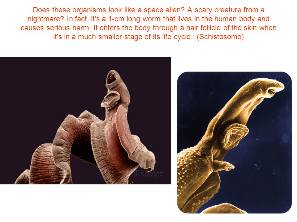 Does these organisms look like a space alien