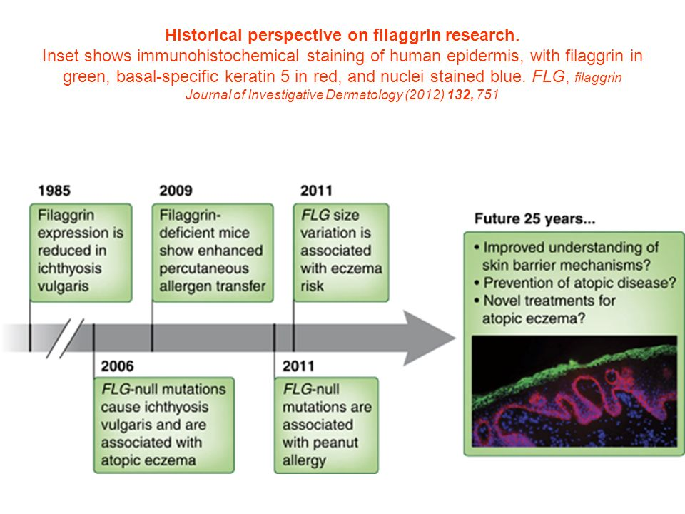 Historical perspective on filaggrin research