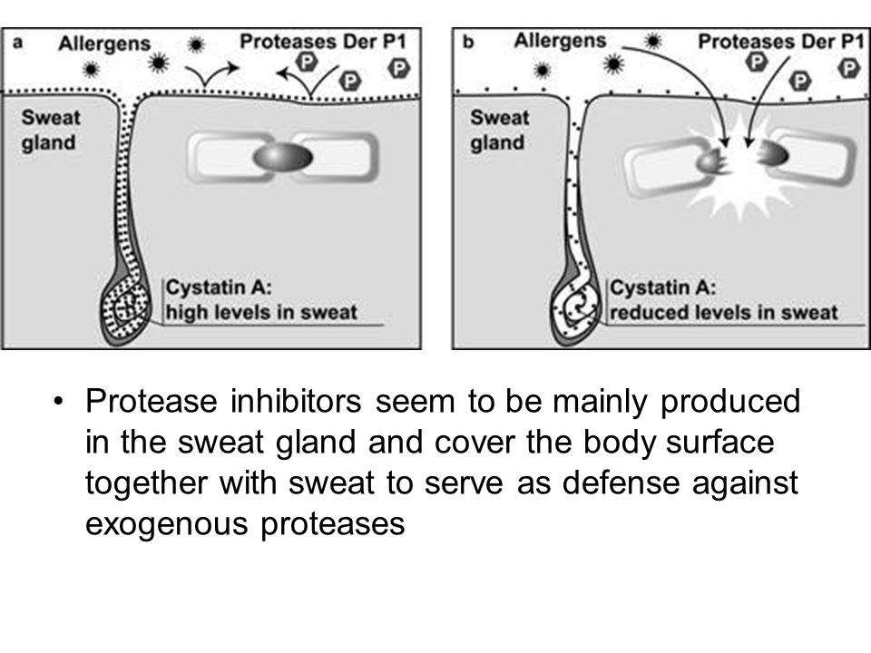 Protease inhibitors seem to be mainly produced in the sweat gland and cover the body surface together with sweat to serve as defense against exogenous proteases