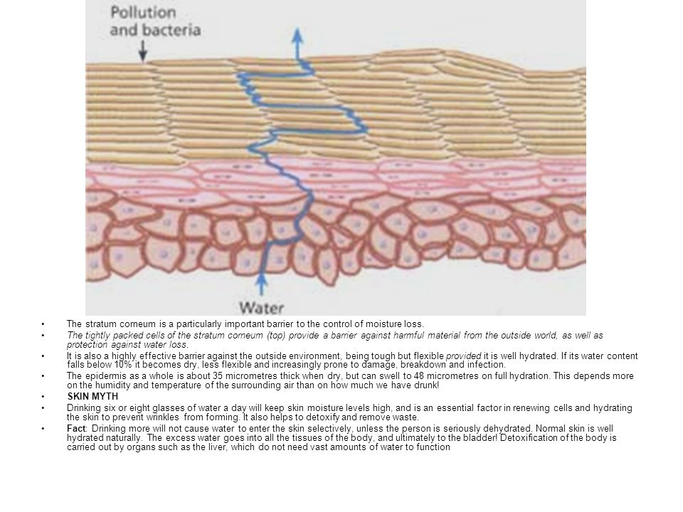 The stratum corneum is a particularly important barrier to the control of moisture loss.