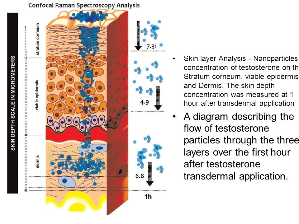 Skin layer Analysis - Nanoparticles concentration of testosterone on the Stratum corneum, viable epidermis and Dermis. The skin depth concentration was measured at 1 hour after transdermal application