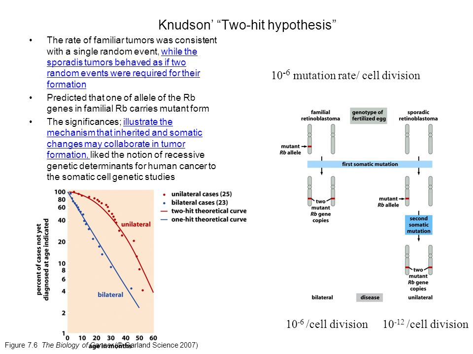 Knudson Two Hit Hypothesis