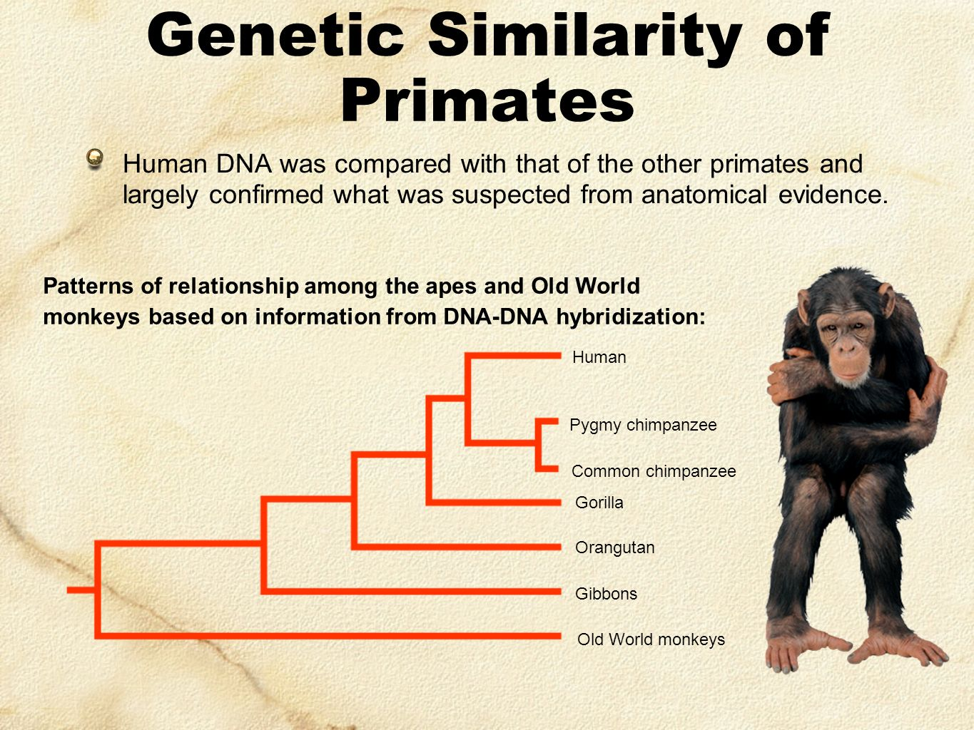 similarities in human and nonhuman primates Best answer: the non human primates, esp the chimps have their genes closely related to human primates for the physical similarities, their dental formula is similar to ours, the skeletal structural is similar as well, their faces have many muscles to specifically convey an.