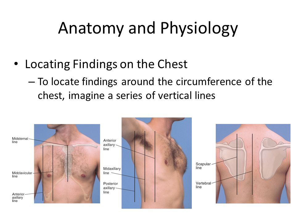 The Thorax and Lungs. - ppt video online download