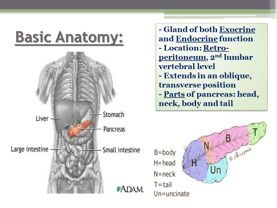 Overview On Neuroendocrine Tumors Of Pancreas Ppt Video Online