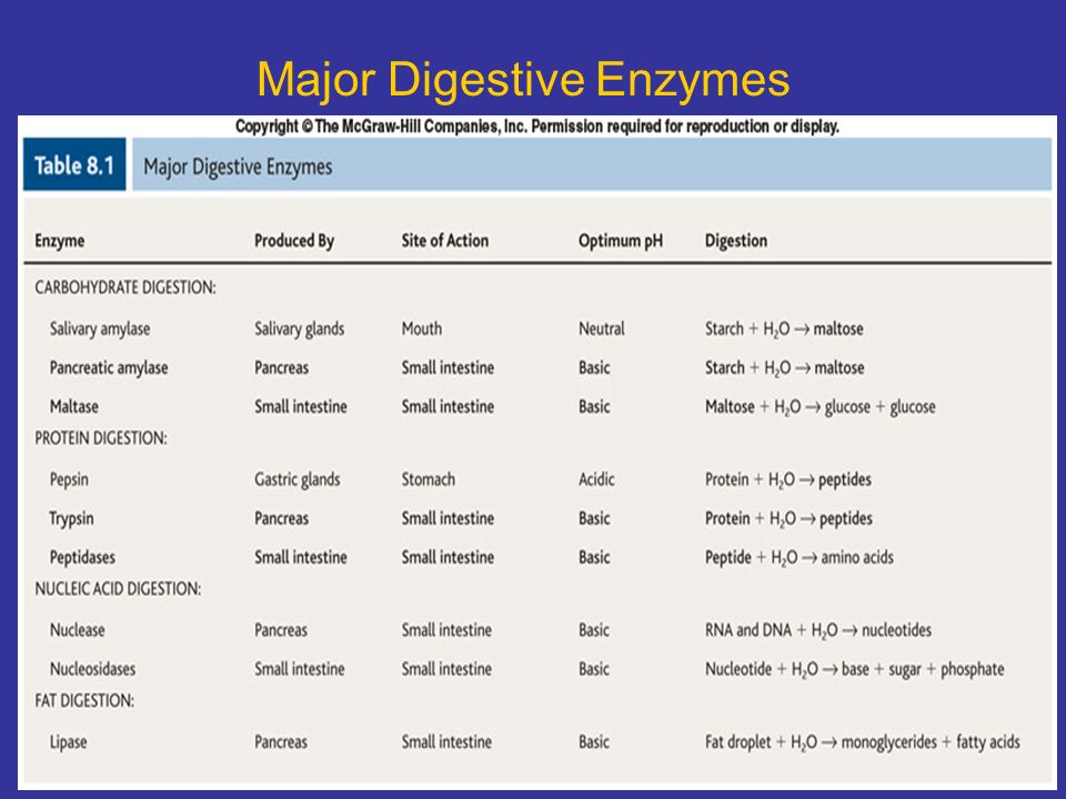 enzymes found in the stomach and their functions