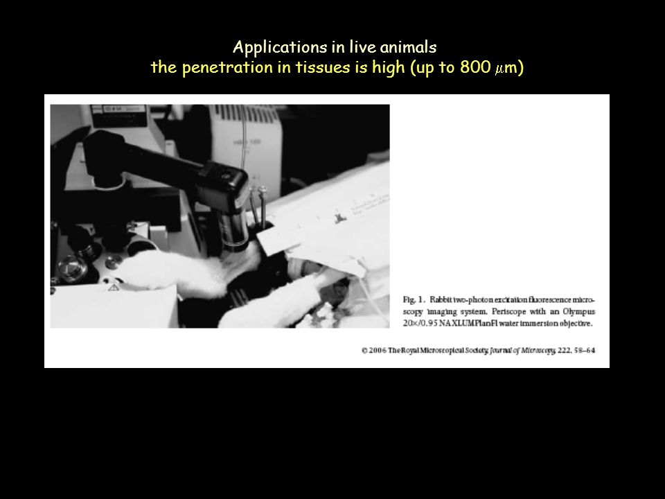 The perrin jablonski diagram ppt video online download 39 applications ccuart Gallery
