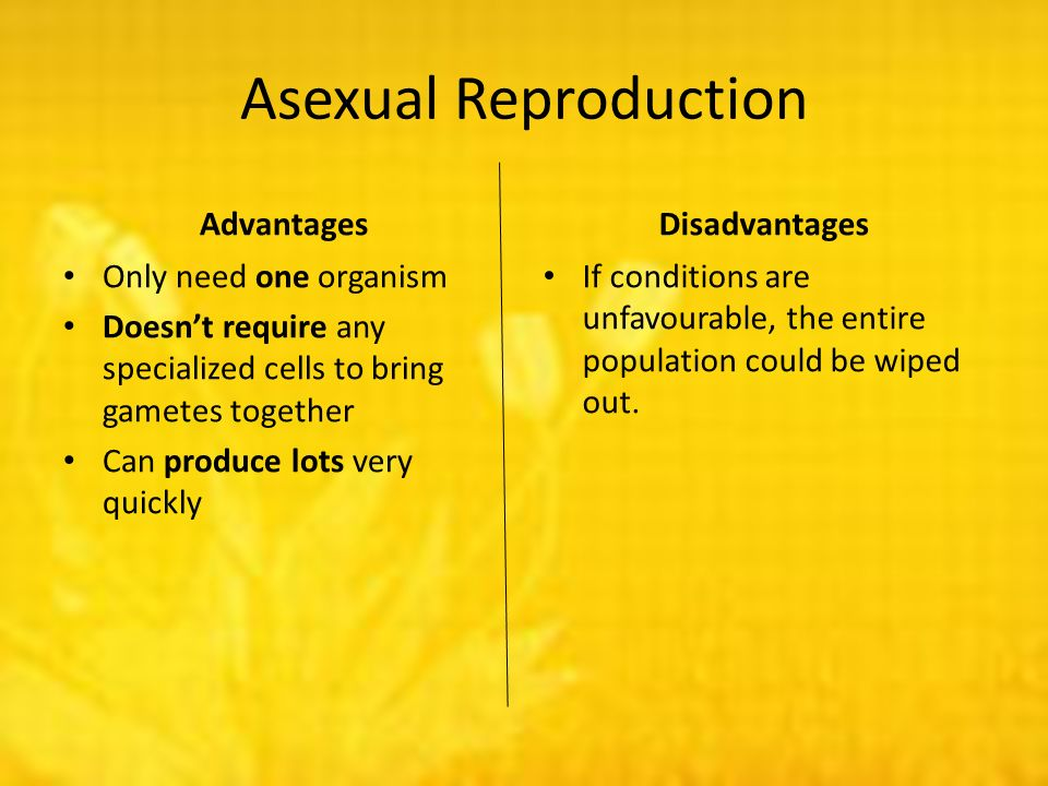 Asexual reproduction bill nye cells