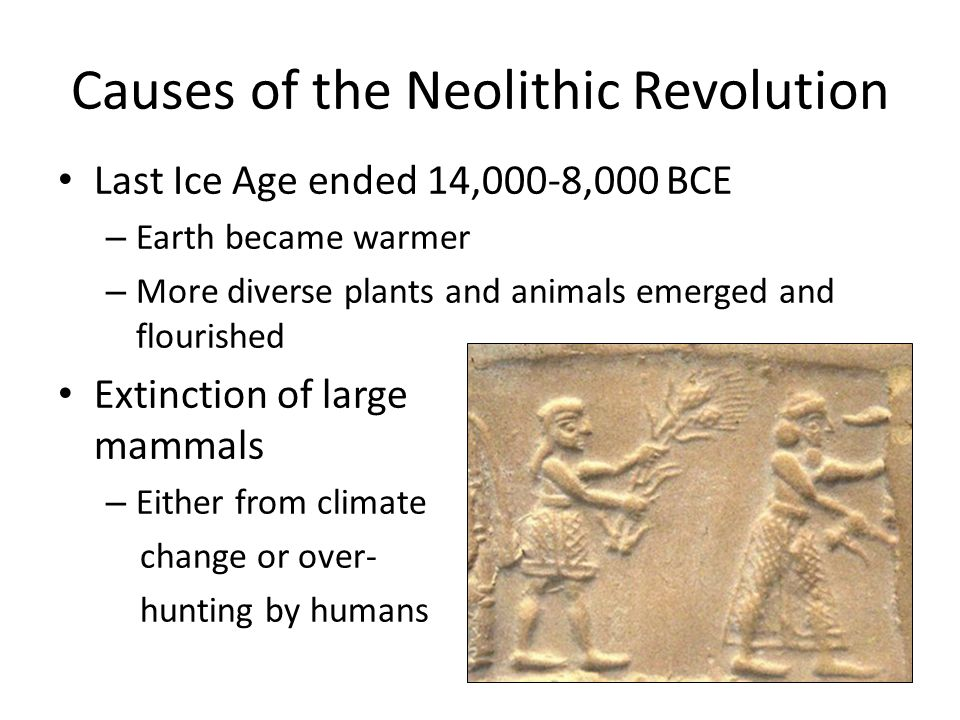what was the impact of the neolithic revolution