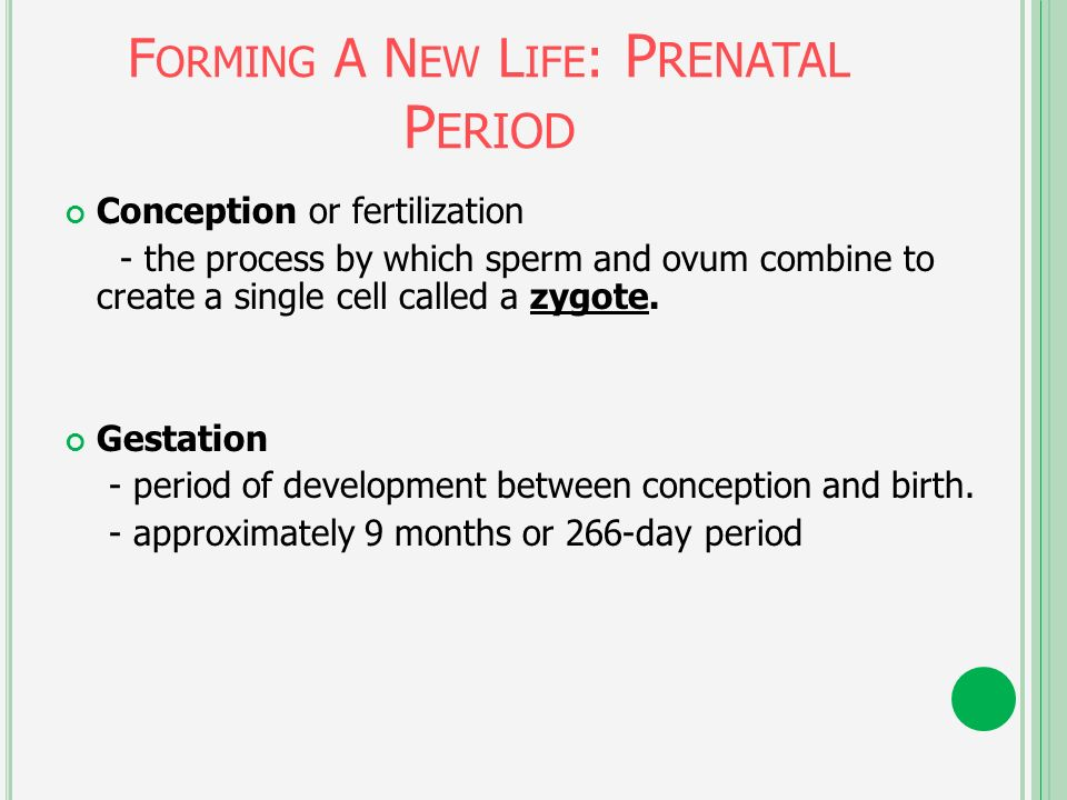 Gestational Period For A Sperm Cell