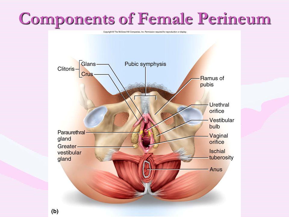 Blank Female Perineum Diagram Wiring Diagrams Control