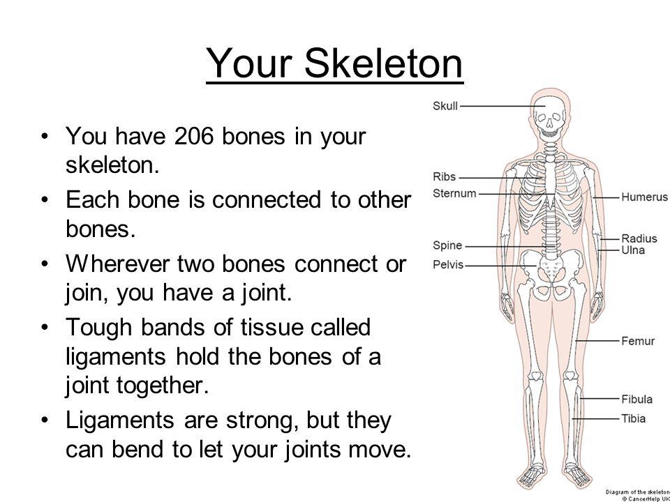 206 bones of the body pdf download