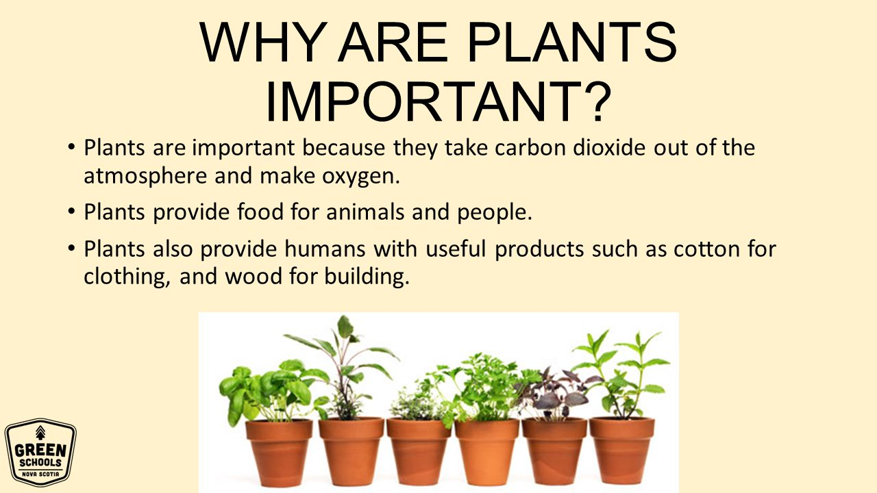 What are useful plants for humans