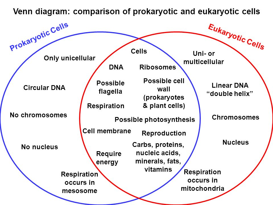 Cell theory how do we know cells exist ppt video online download venn diagram comparison of prokaryotic and eukaryotic cells ccuart Images