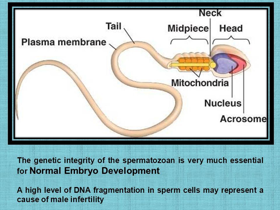 Enhanced shedding of cytomegalovirus in semen of human immunodeficiency virus