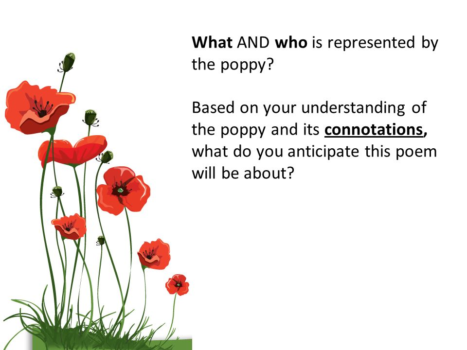 Poppies by jane weir ppt video online download what and who is represented by the poppy mightylinksfo