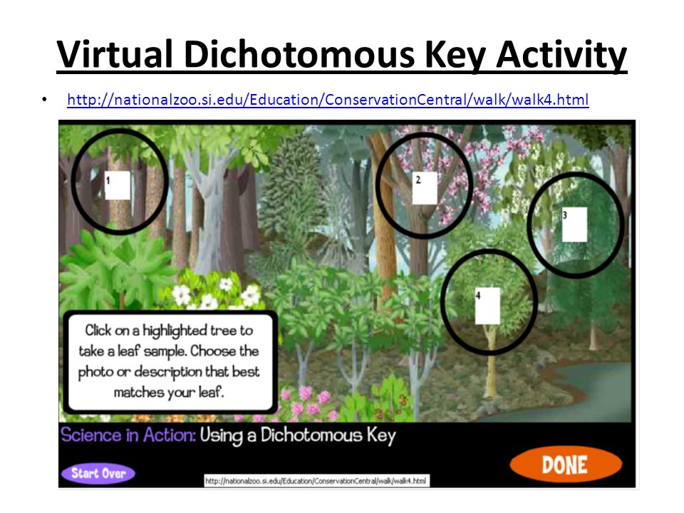 Dichotomous Keys Ppt Video Online Download