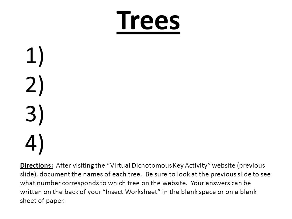 dichotomous key practice for middle school