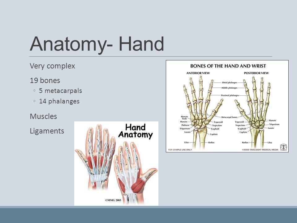 Hand Anatomy Ligaments Gallery - human body anatomy
