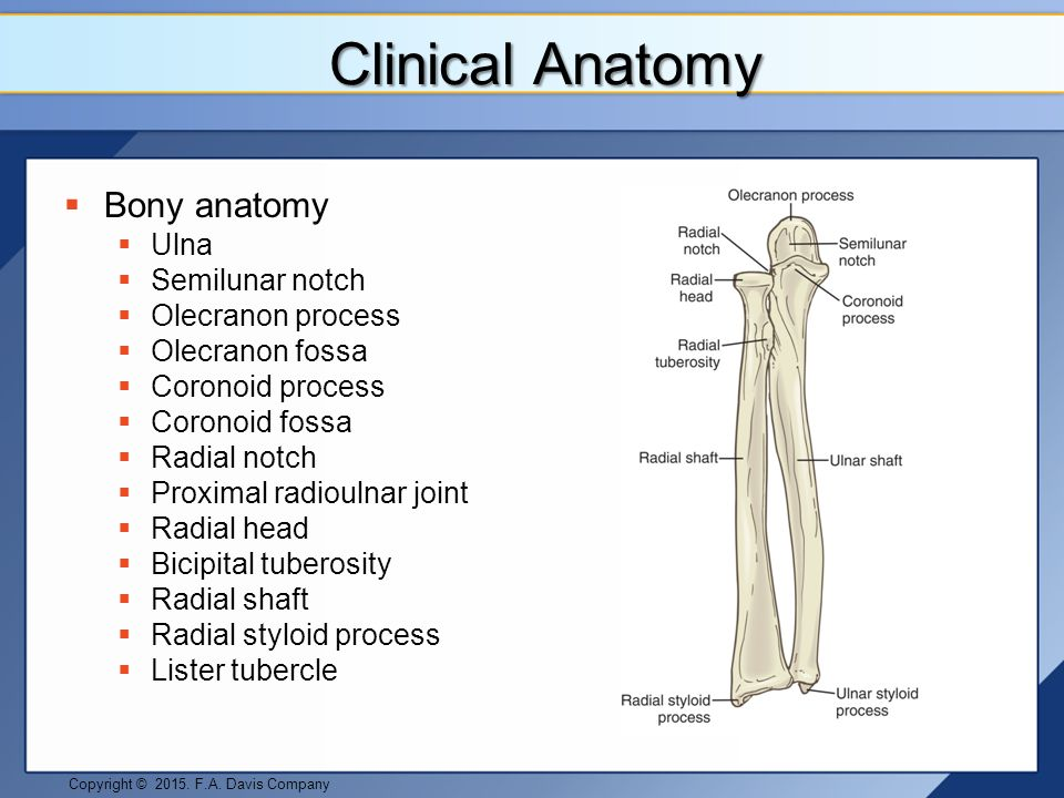 Elbow and Forearm Pathologies - ppt video online download