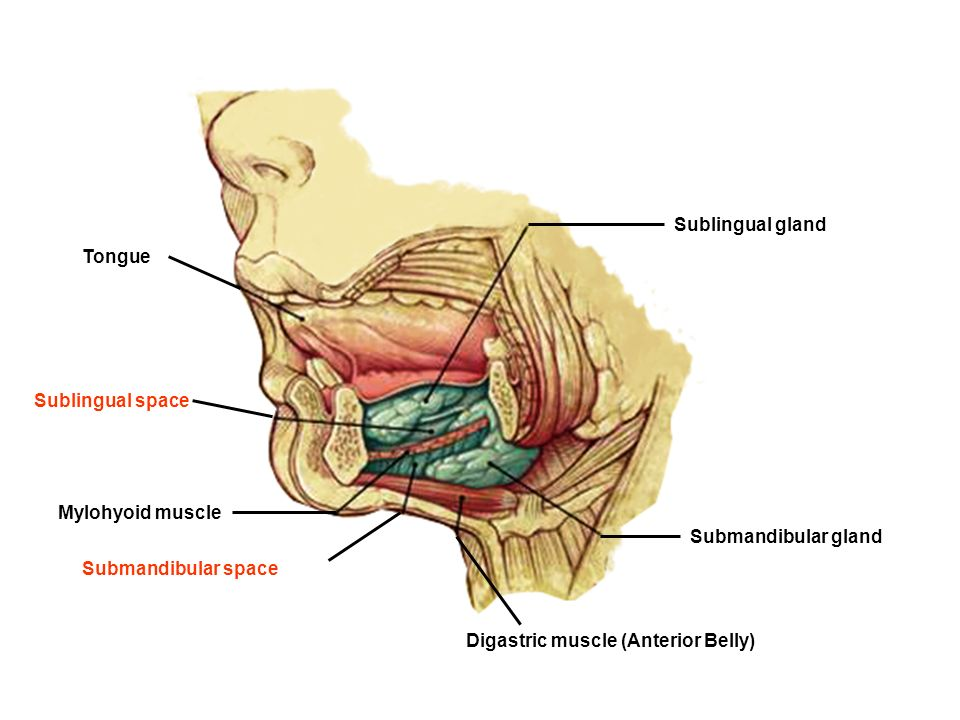 FASCIAL SPACES INFECTION - ppt video online download