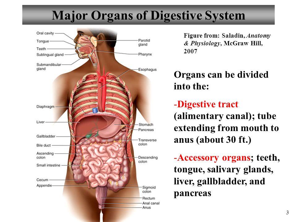 Fantástico Anatomy And Physiology Digestive System Exam Galería ...