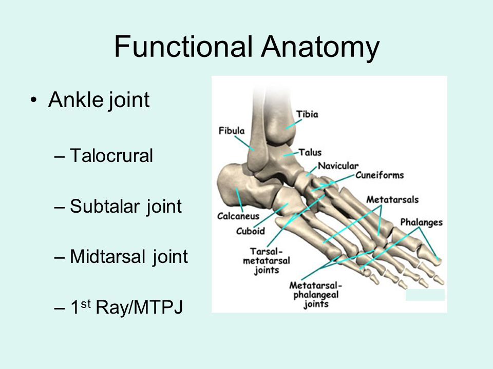 Clinical Foot And Ankle Biomechanics Overview Of Course By Paul