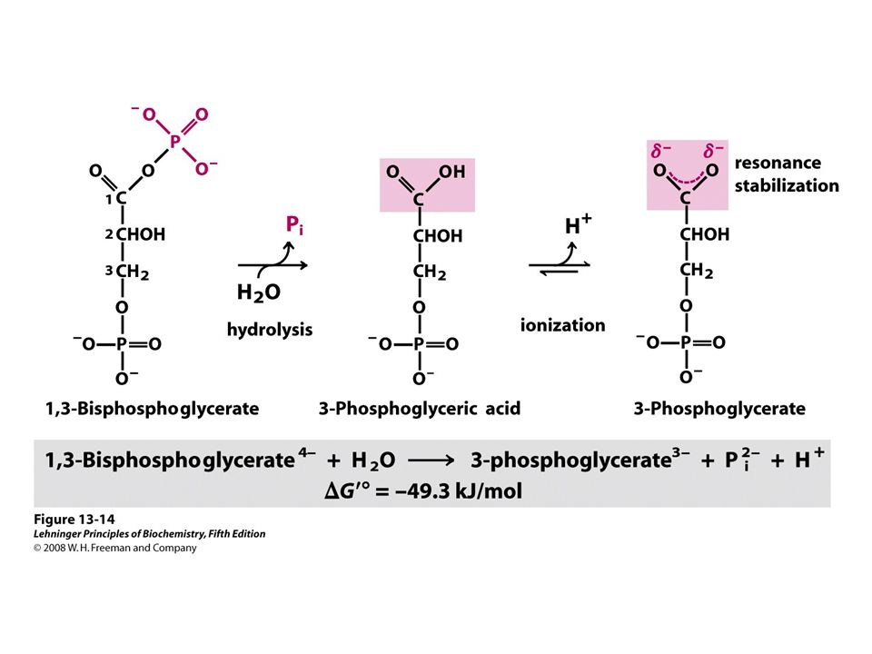 lehninger biochemistry pdf free download