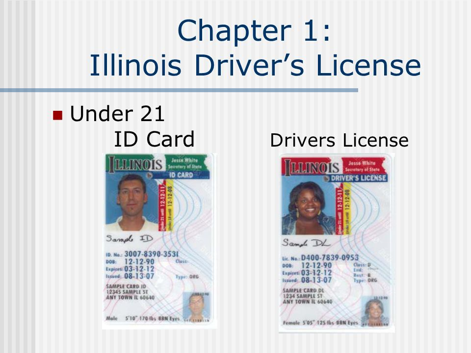 illinois new drivers license online