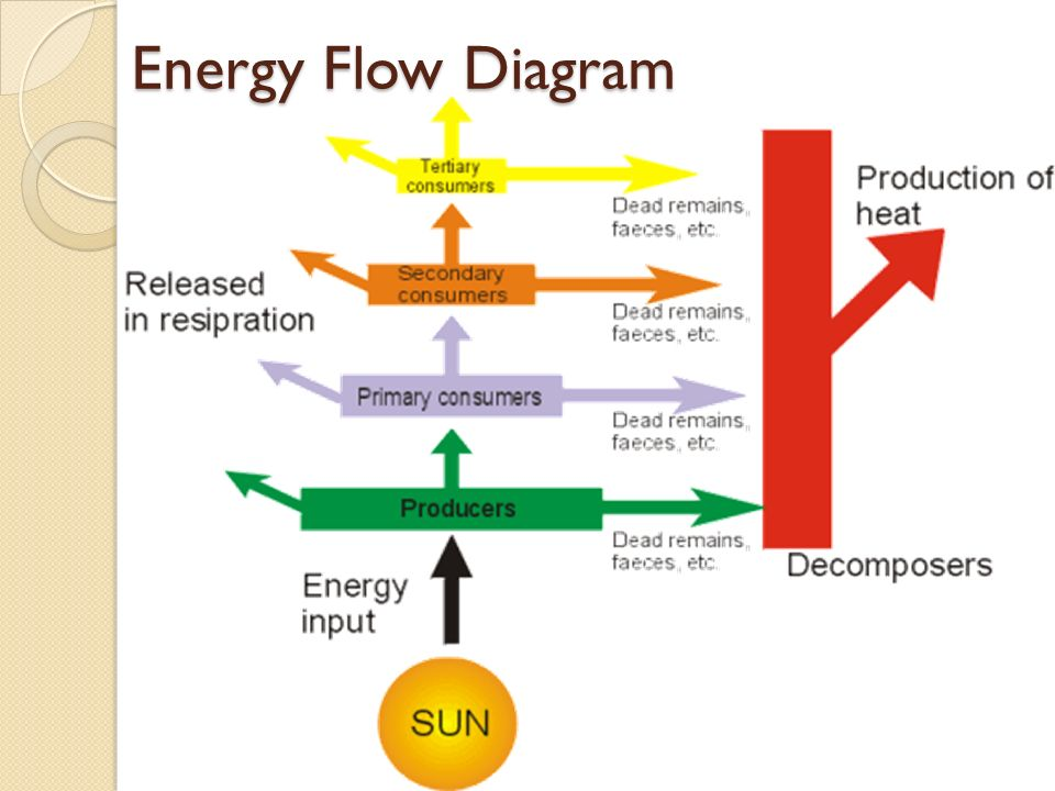 231 Flows Of Energy And Matter Ppt Video Online Download