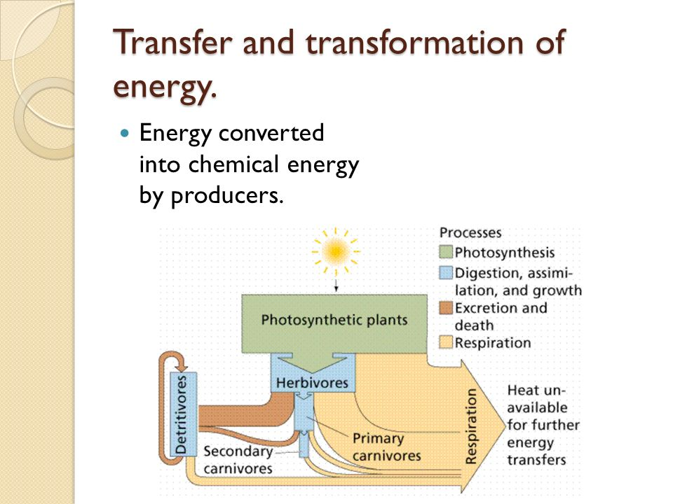 2 3 1 flows of energy and matter ppt video online download