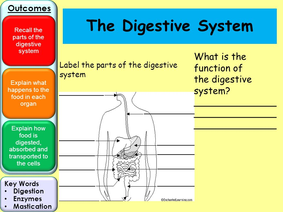 What Is In Your Digestive System Ppt Video Online Download